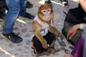 montreur-de-singe