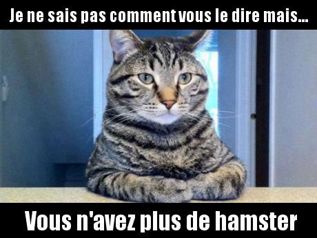 chat-hamster