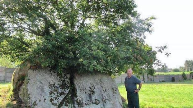 chêne dans granit
