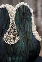 sculpture plumes