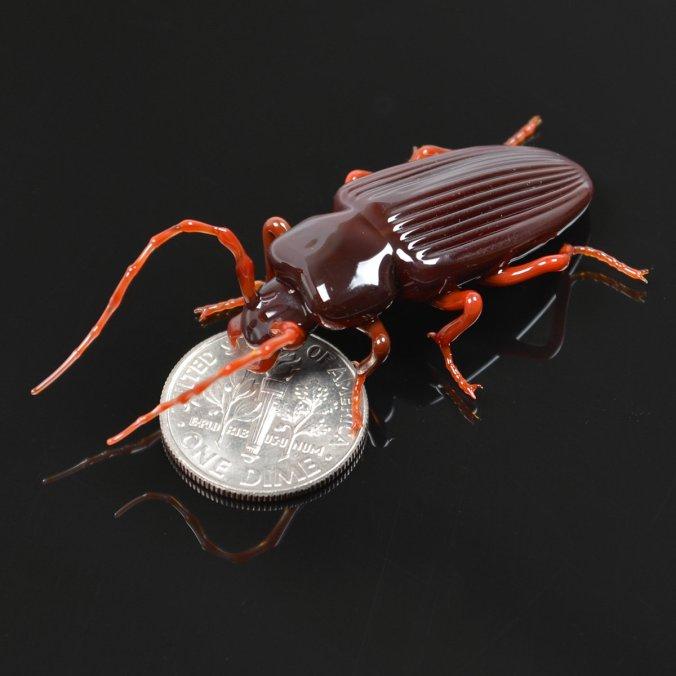 insectes-de-verre-de-Wesley-Fleming-6