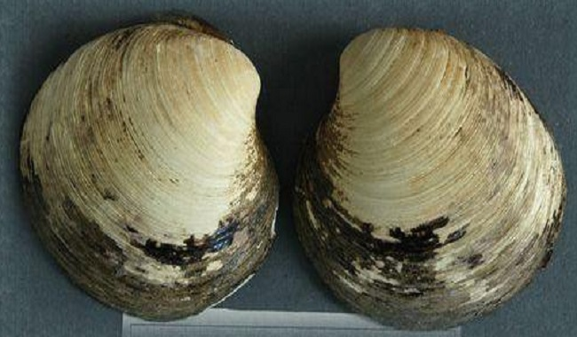 plus vieux mollusque au monde