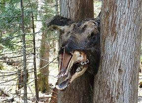 loup arbre