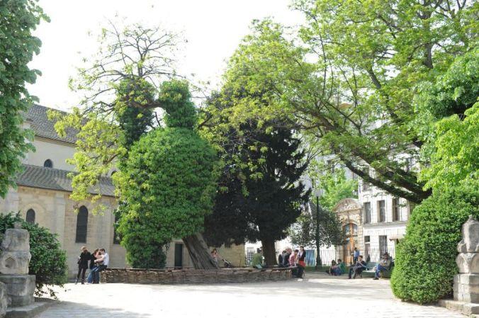 Robinier arbre 5 jpg