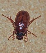 Résultat d'images pour cafard insecte images